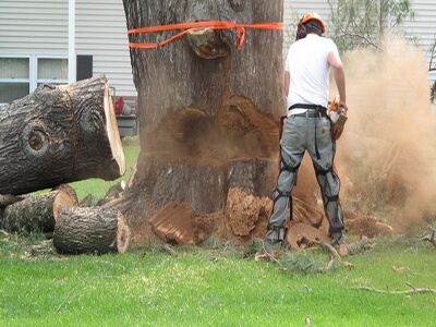 Sydney Wide Tree & Garden services