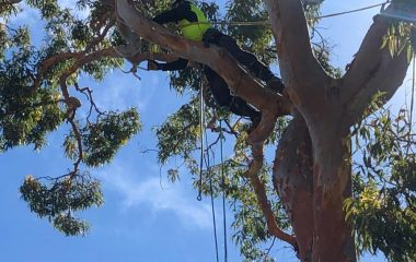 Tree Pruning and Tree Trimming tree-removal