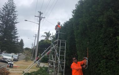 Tree Trimming and Tree Pruning Sydney